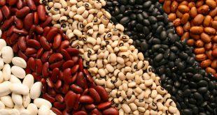 خرید عمده کنسرو لوبیا زیر قیمت بازار